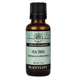 Top picks Essential Oils for Rosacea - Tea Tree 100% Pure Therapeutic Grade Essential Oil by Plantlife